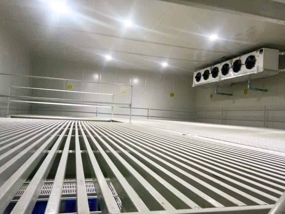 Frozen Storage & Blast freezer