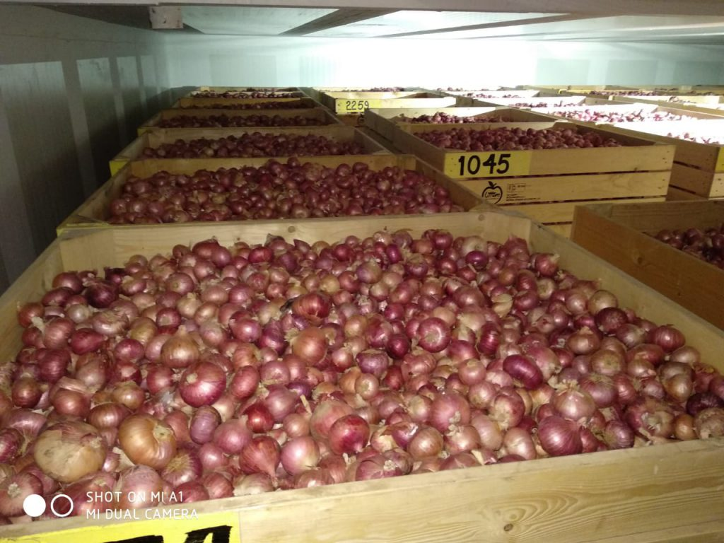 Onion Storage in Cold Storage room