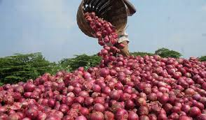 Onion With farmer