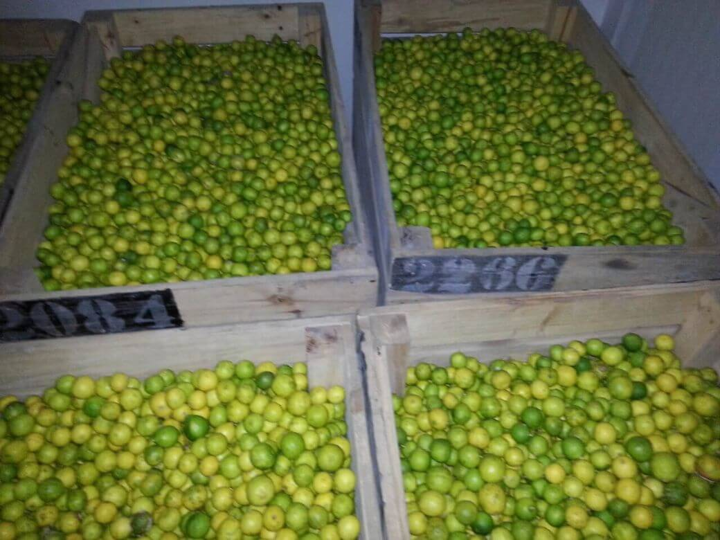 Lemon Storage In Controlled Atmosphere Cold Storage