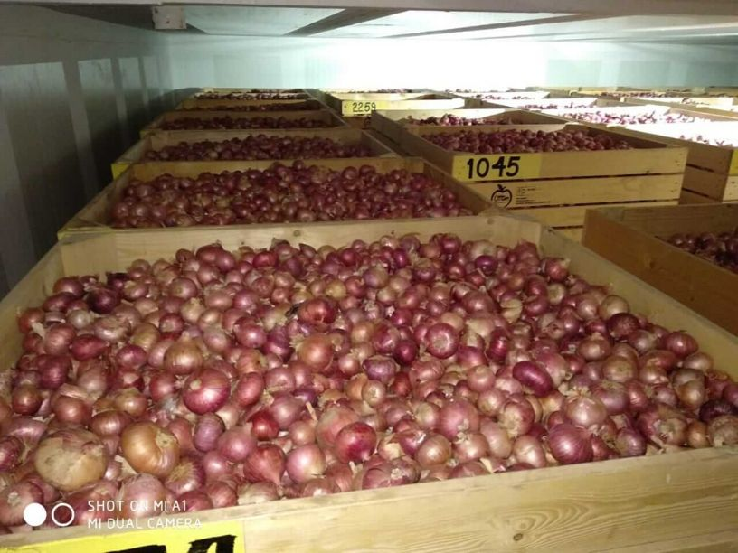 Onion Storage In Modified Atmosphere Cold Storage
