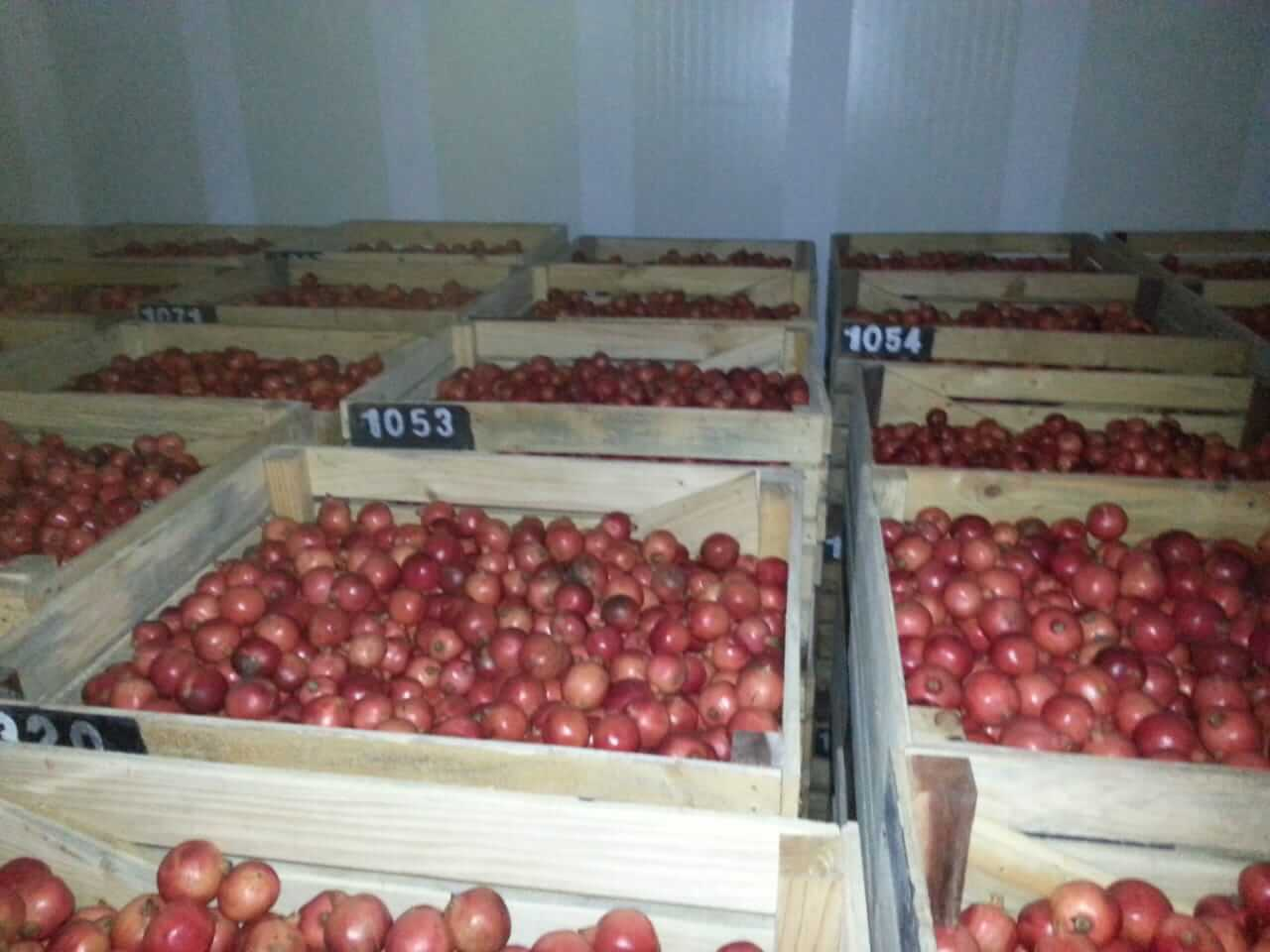 pomegranate Storage In Cold Storage