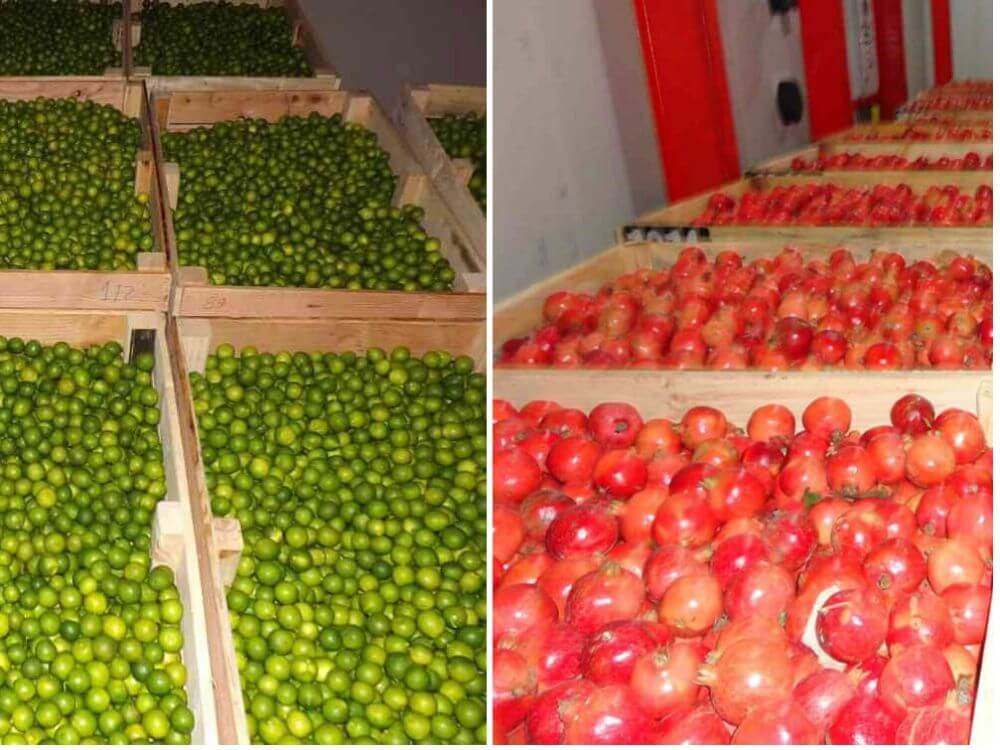 lemon and pomegranate Storage In Cold Storage in india