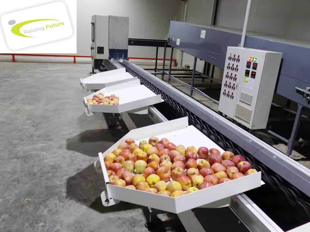 apple grading machine in himachal