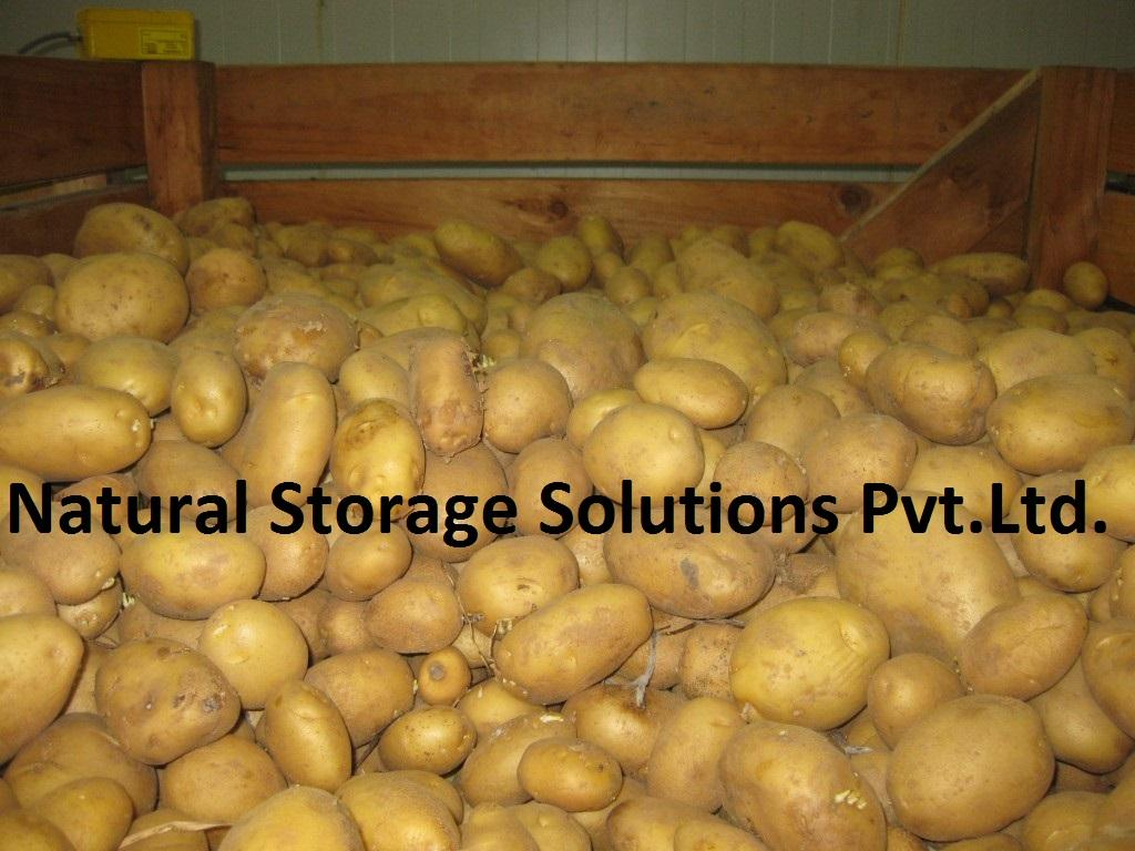 Potato storage in Cold Storage